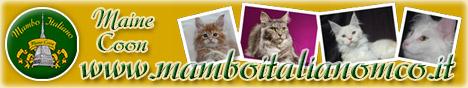 Mambo Italiano - Allevamento Amatoriale del Gatto Maine Coon